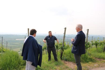 Bürgermeister Andreas König sowie Thomas Zawalski stehen mit Thomas Männle in den Reben.